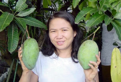 keuntungan mengkonsumsi buah mangga