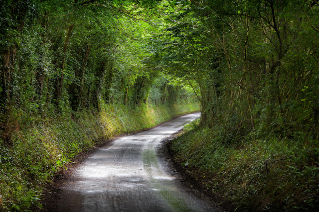 A tunnel of green trees surround a winding country lane in Exmoor