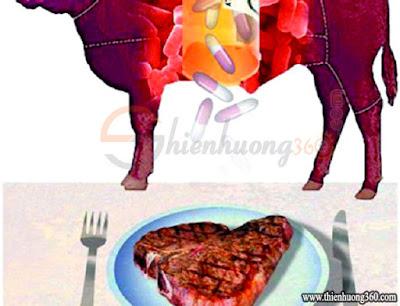 Bò thuốc không chỉ nuôi bằng chất kích thích sinh trưởng cho bò lớn nhanh, mà còn có rất nhiều chất kháng sinh