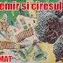 """Rezumat scurt """"Micul Cantemir și cireșul"""" de George Bălăiță"""
