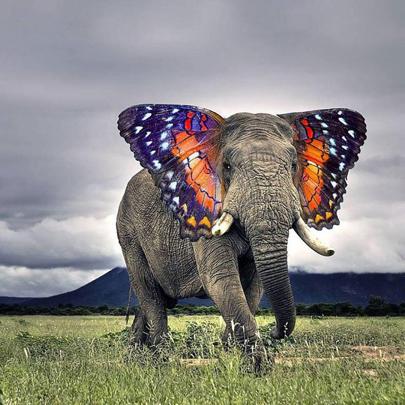 15 animales híbridos nacidos en la tierra del Photoshop