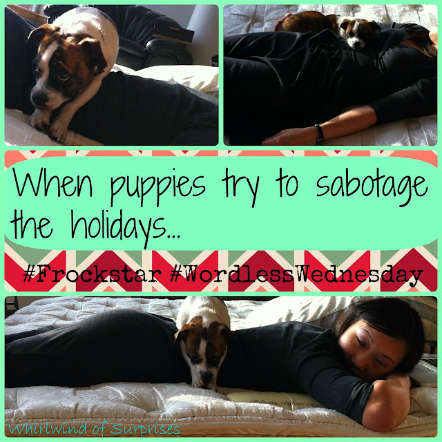 #JackRussell sabotages the hoildays