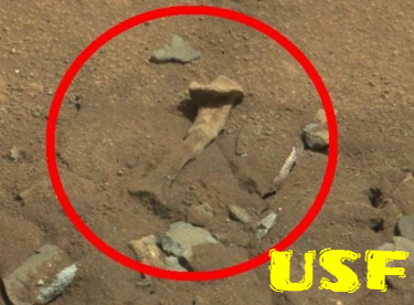 Skeletons and bones found on Mars by the Mars Rover.