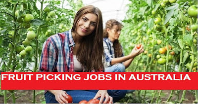 Fruit Picking Jobs In Australia