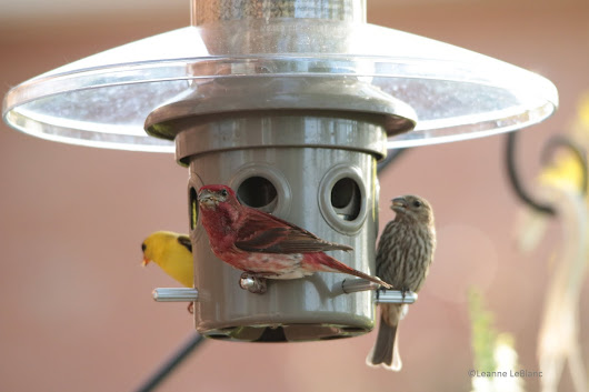 Nature Notes Blog: HOW TO CLEAN YOUR BIRD FEEDER