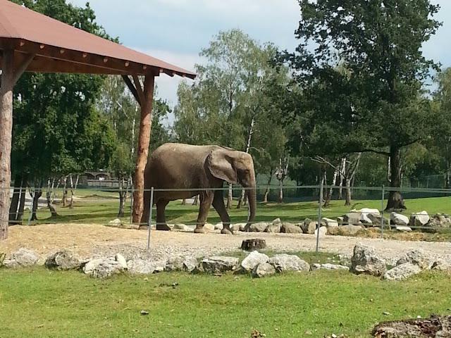 Elefante safari pombia