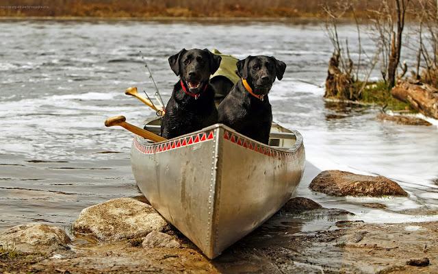 Hond in een kano