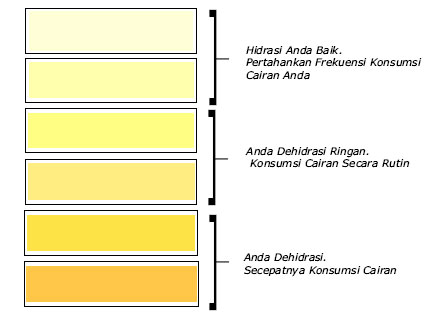 warna urine