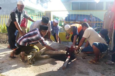 Moment Idul Adha, Kemenag Tanjungbalai Sembelih Kurban