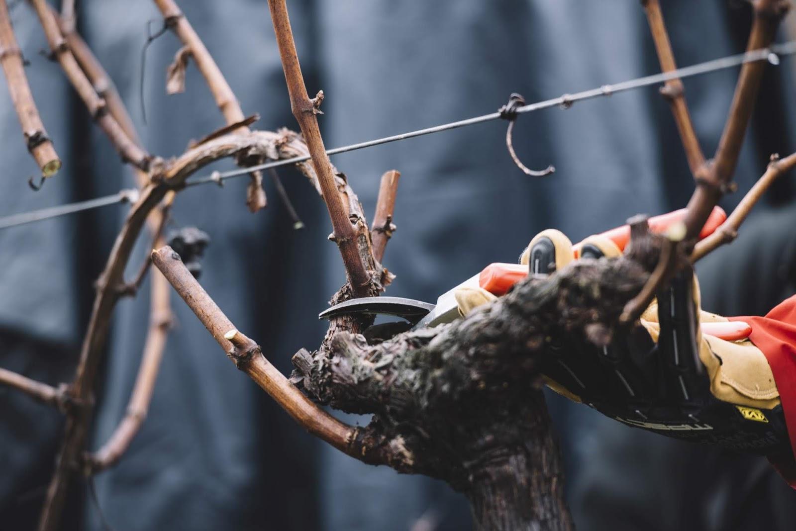 Periodo Migliore Per Potare Quercia wine blog roll - il blogger del vino italiano: giugno 2018