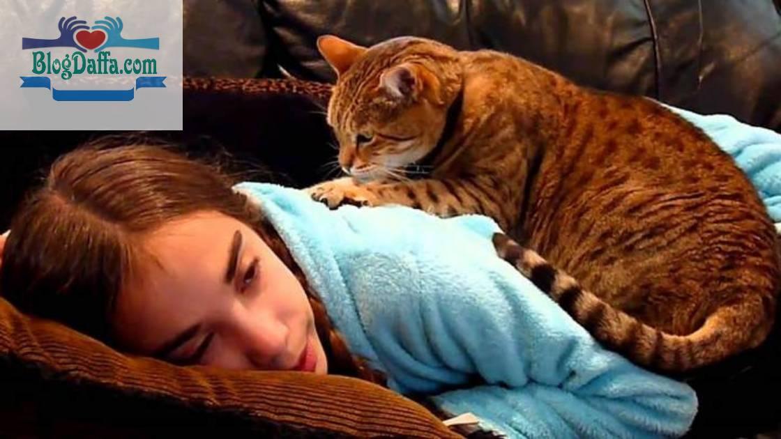 Kenapa kucing suka Memijat Menggunakan Telapak Tangan