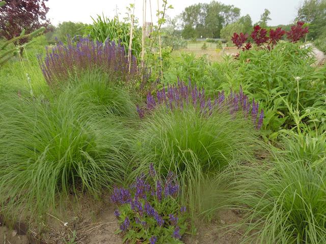 trawy i byliny