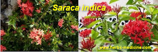 benefit Saraca indica for Hypertension