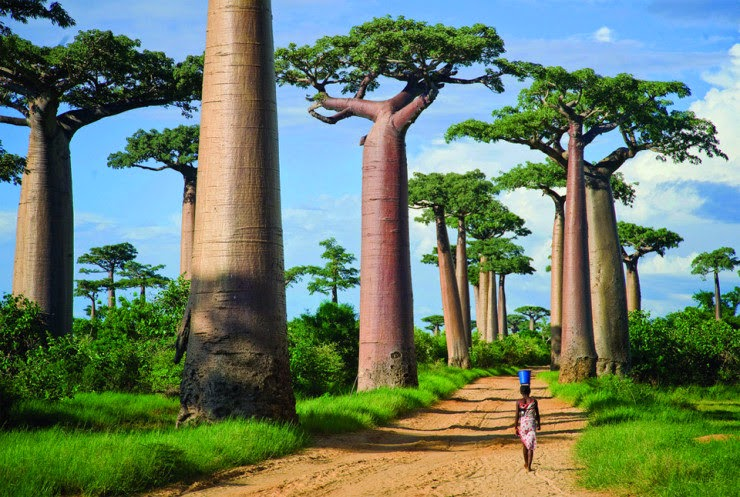 5. Avenue of the Baobabs, Menabe, Madagascar - 29 Most Romantic Alleys to Hike