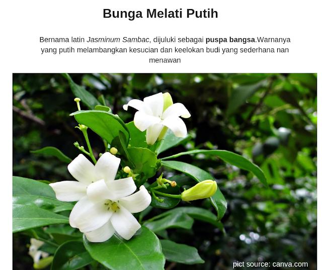 bunga-melati-putih