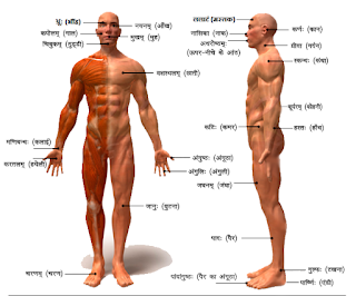 parts_of_body_in_sanskrit