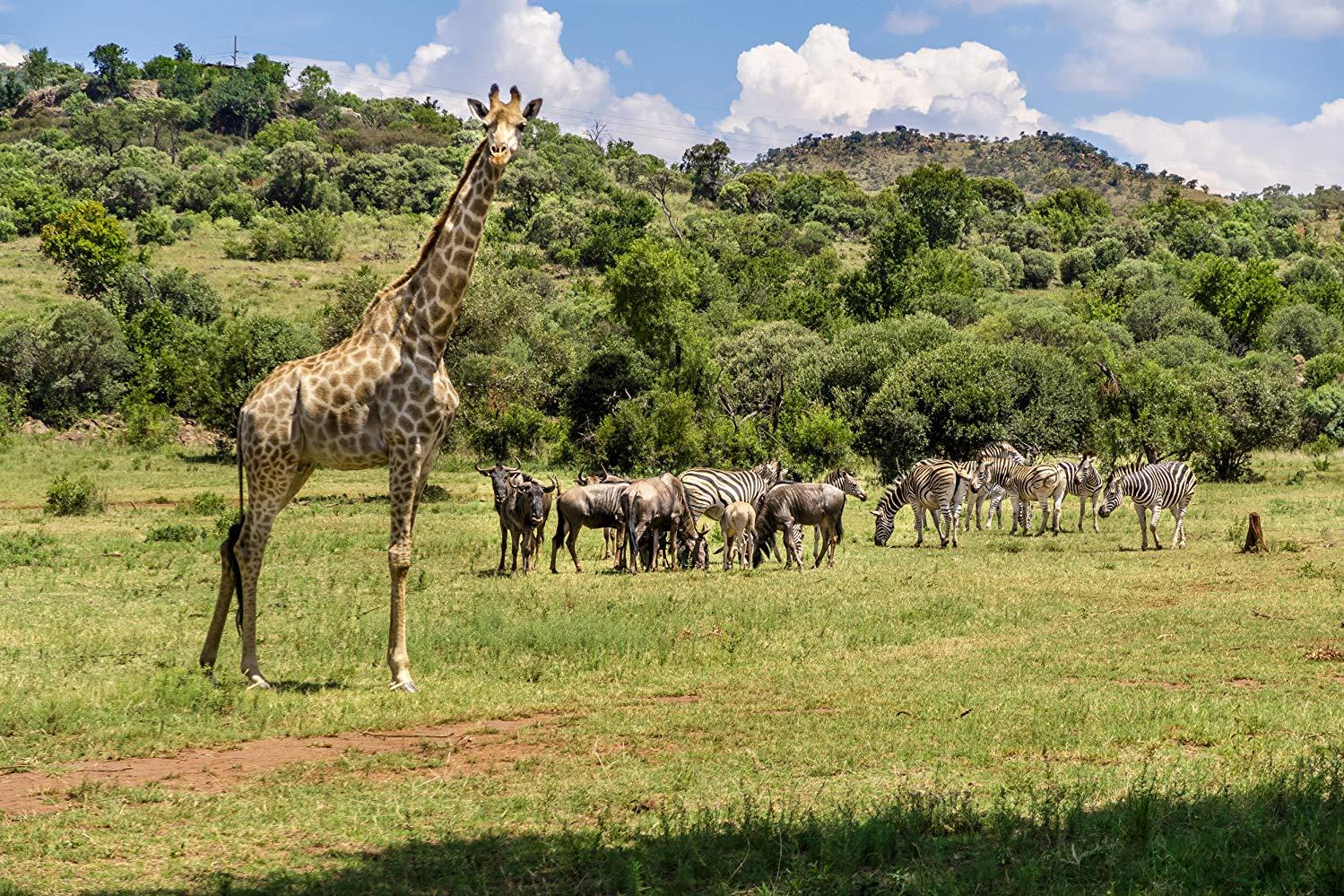 Love on Safari