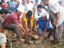 Sejarah Qurban Berawal Dari Nabi Ke Nabi