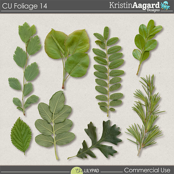 http://the-lilypad.com/store/Digital-Scrapbook-Design-Tools-CU-Foliage-14.html