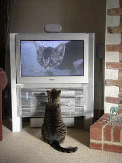 cat watches cat on tv