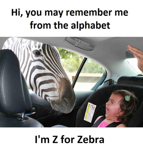 Zebra from Z