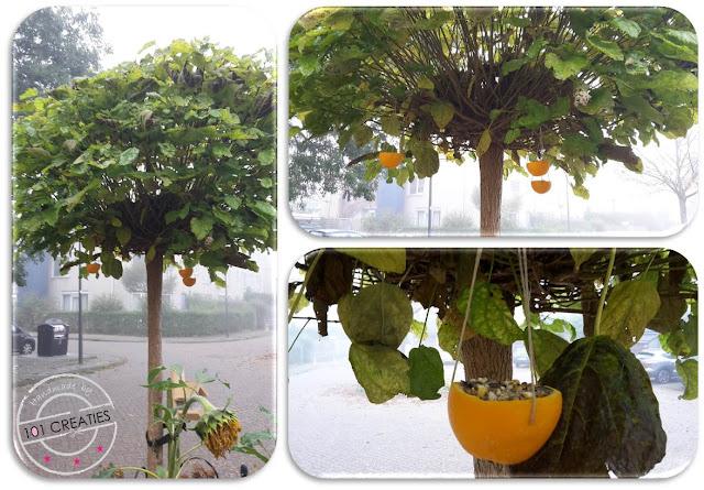 vogelvoer in sinaasappel schillen