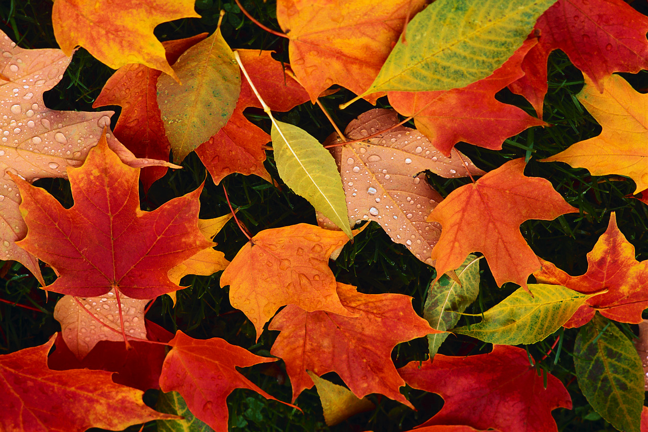 Fall Leaves Quotes Time. QuotesGram
