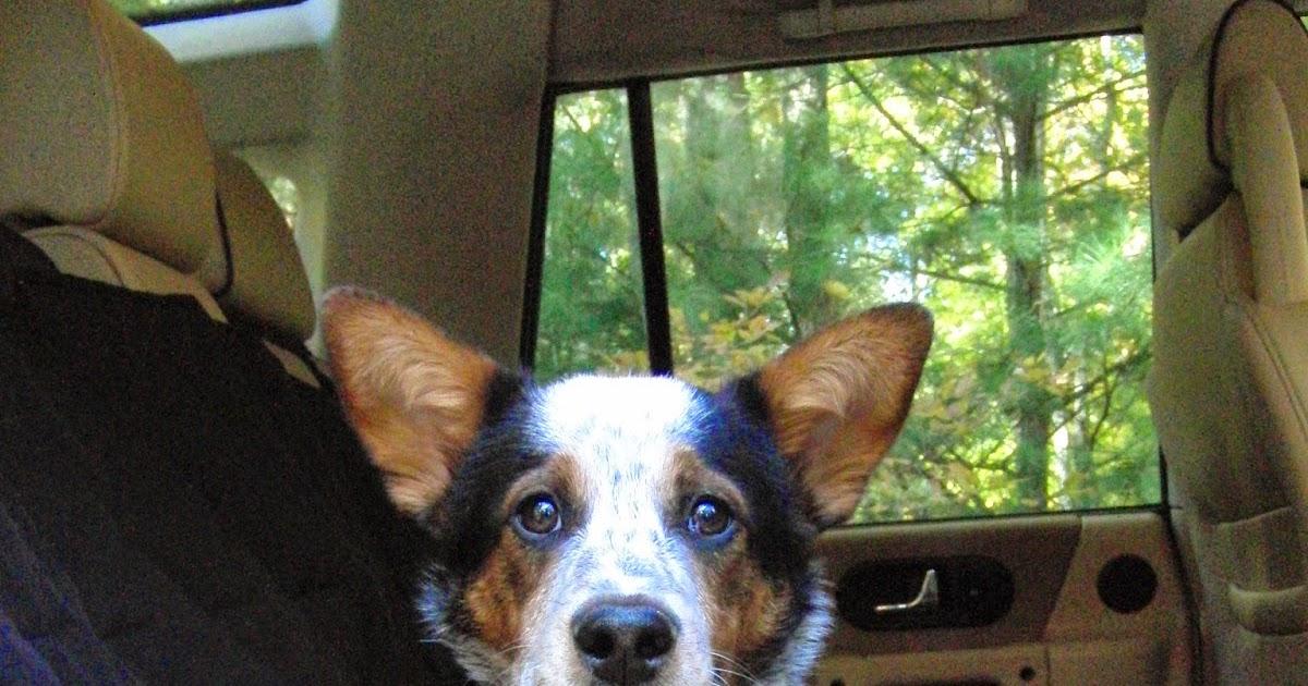 Dog Car Sickness Natural Remedy