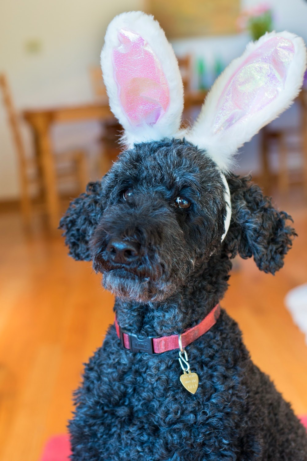 dogs in Easter bunny ears