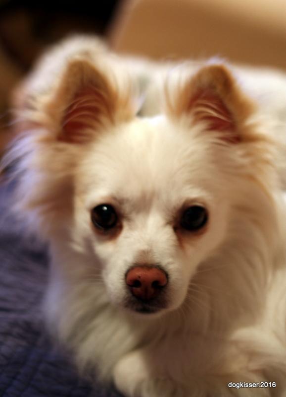 Spca Dogs For Adoption Nova Scotia