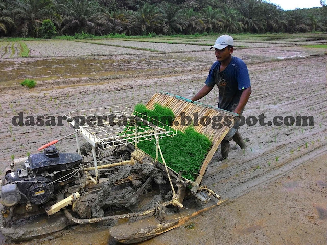 Proses penanaman padi menggunakan mesin modern