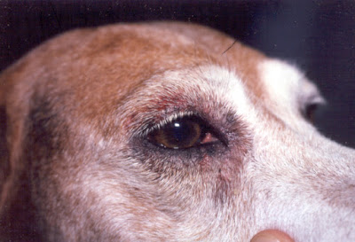 Could Your Dog Have Anemia?