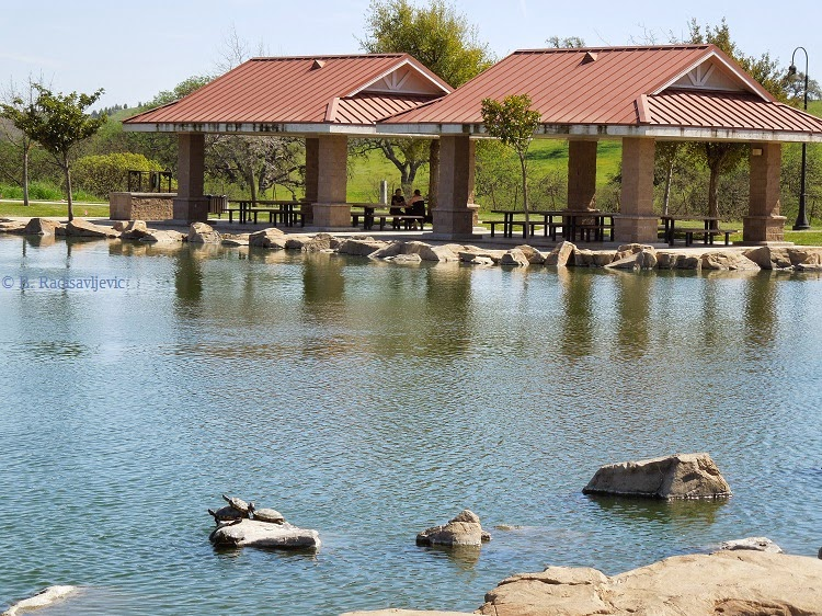 Pond at Barney Schwartz Park in Paso Robles, © B. Radisavljevic