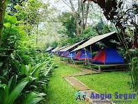 program camping