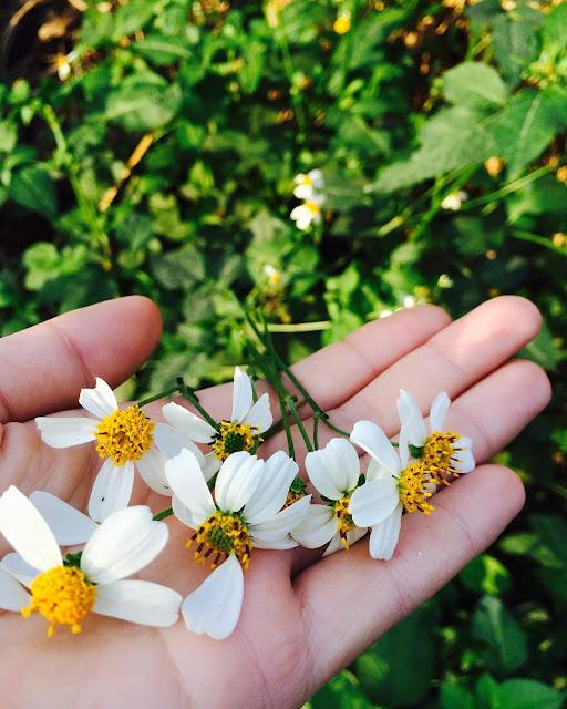 Hình ảnh hoa dại đẹp nhất, Bông hoa dại tuyệt đẹp nhất năm