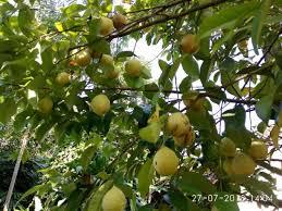 http.www.distributorpupuknasa.com