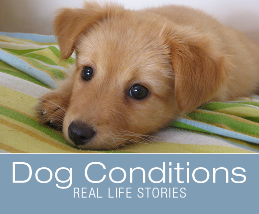 Dog Conditions - Real-Life Stories: Fecal Transplant Saves Puppy Dying from Parvo