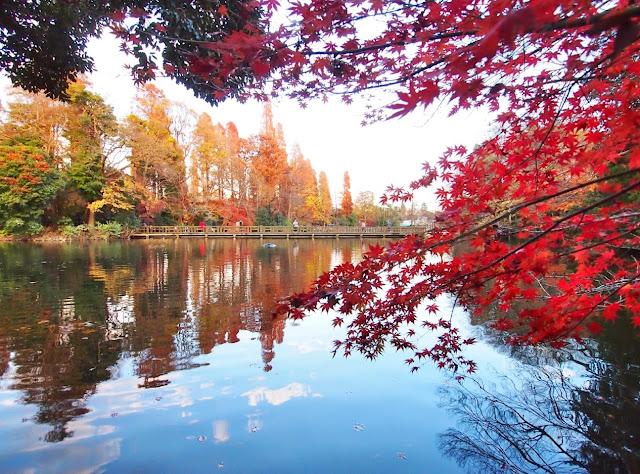 井の頭公園 紅葉