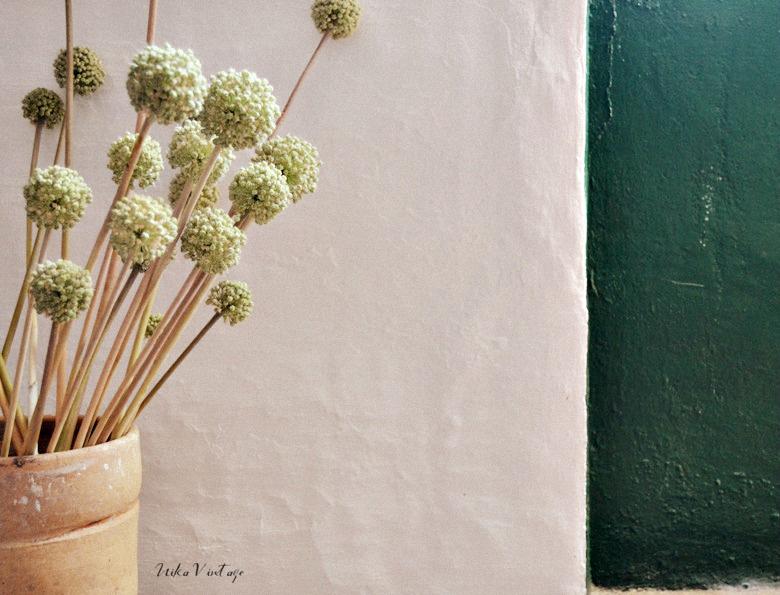 Veremos como hacer varios arreglos básicos florales con una flor silvestre muy especial,la flor de la cebolla