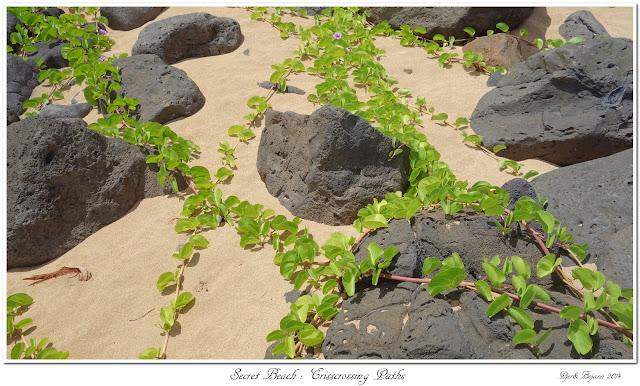 Secret Beach: Crisscrossing Paths