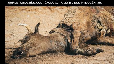 A morte dos primogênitos (Bíblia comentada - Êxodo 12)