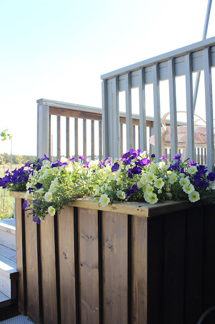 DIY deck planter, petunias