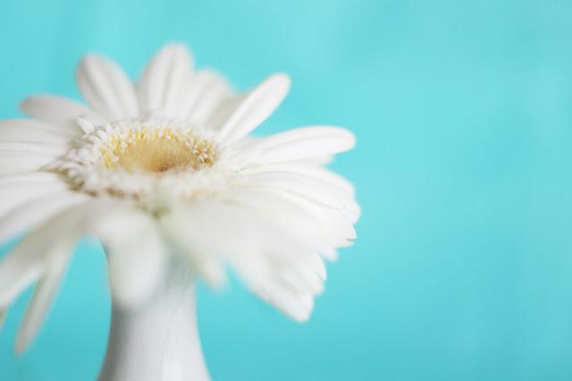 freelensing_daisy_flower