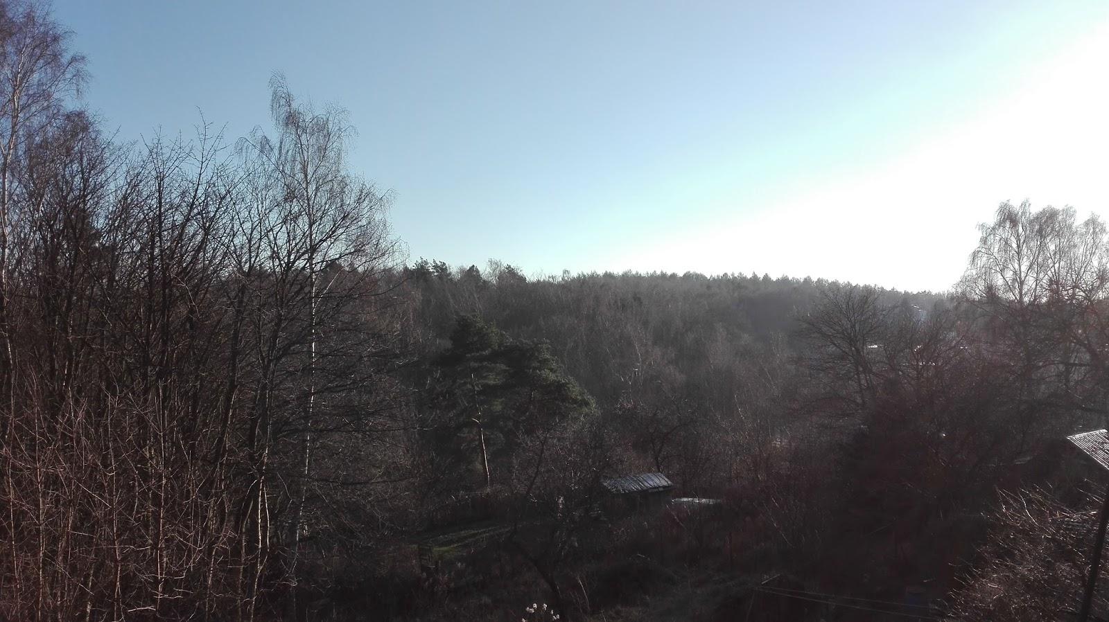 Widok na las w styczniu