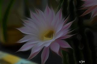 Blumen, flores, Flower, fleurs, květiny, Flores, blomme, blommor, çiçekler, kwiaty, Flor, Hoa, nở hoa, floración, bloom, Kukka, kukinta, La floraison, Fiore