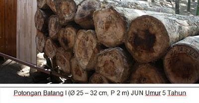 kayu jati unggul nusantara (JUN)