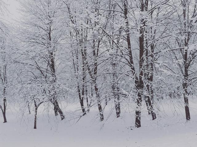 Leśne wędrówki zimą