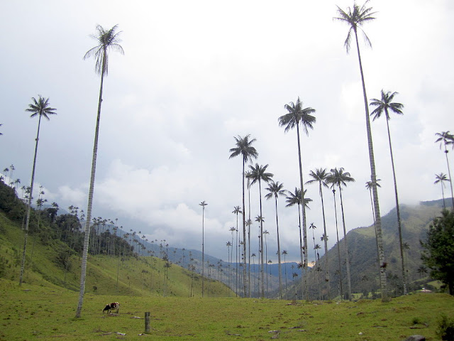 Valley of Cocora_Colombia