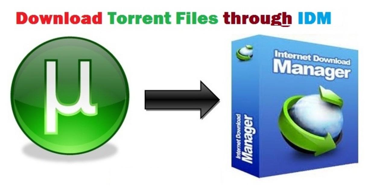 internet download manager download torrent
