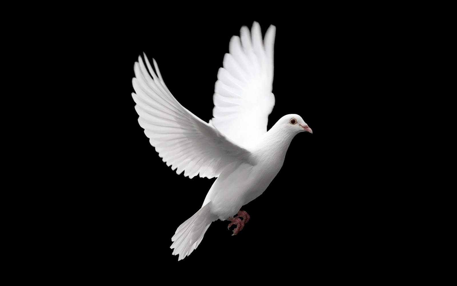 Peace Hd Wallpapers Free Download Dove Wallpapers Hd Beautiful Wallpapers Collection 2018